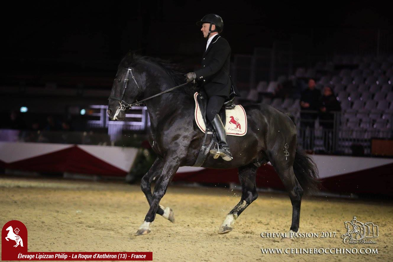 Elevage LIPIZZAN PHILIP Show Delevage Cheval Passion 2017 7