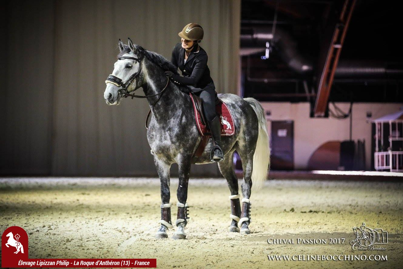 Elevage LIPIZZAN PHILIP Show Delevage Cheval Passion 2017 9
