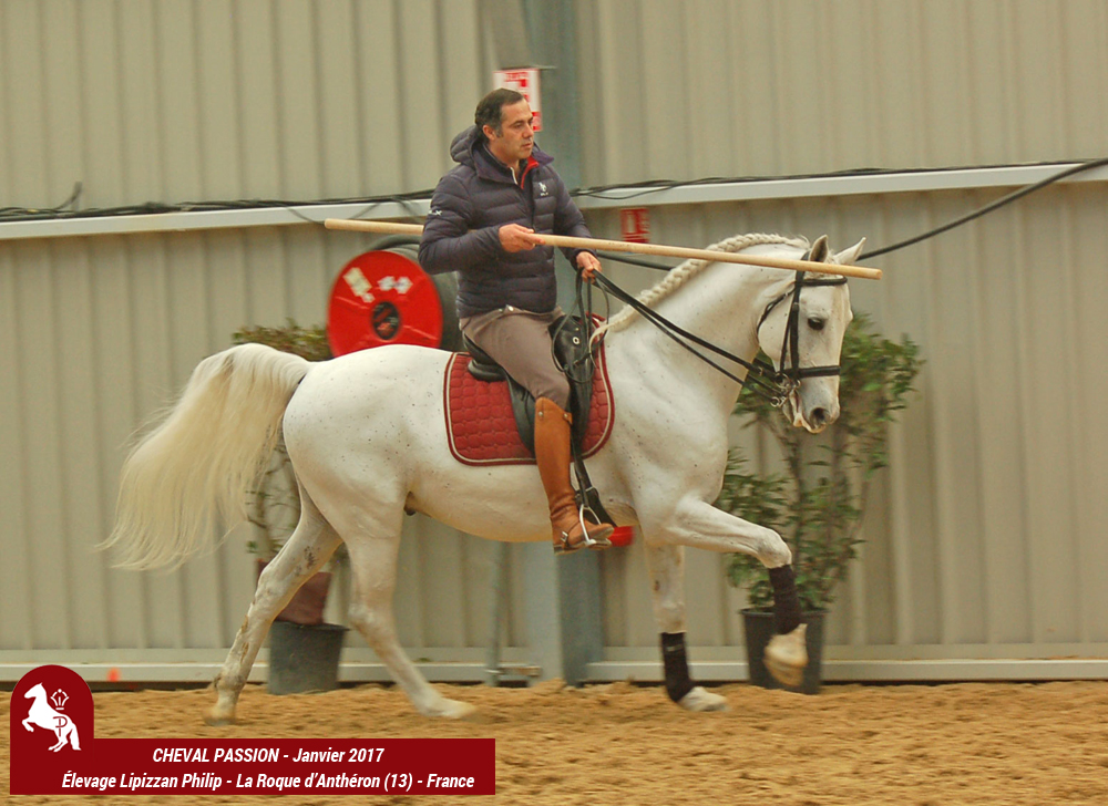Elevage LIPIZZAN PHILIP CHEVAL PASSION 2017 Maestoso11