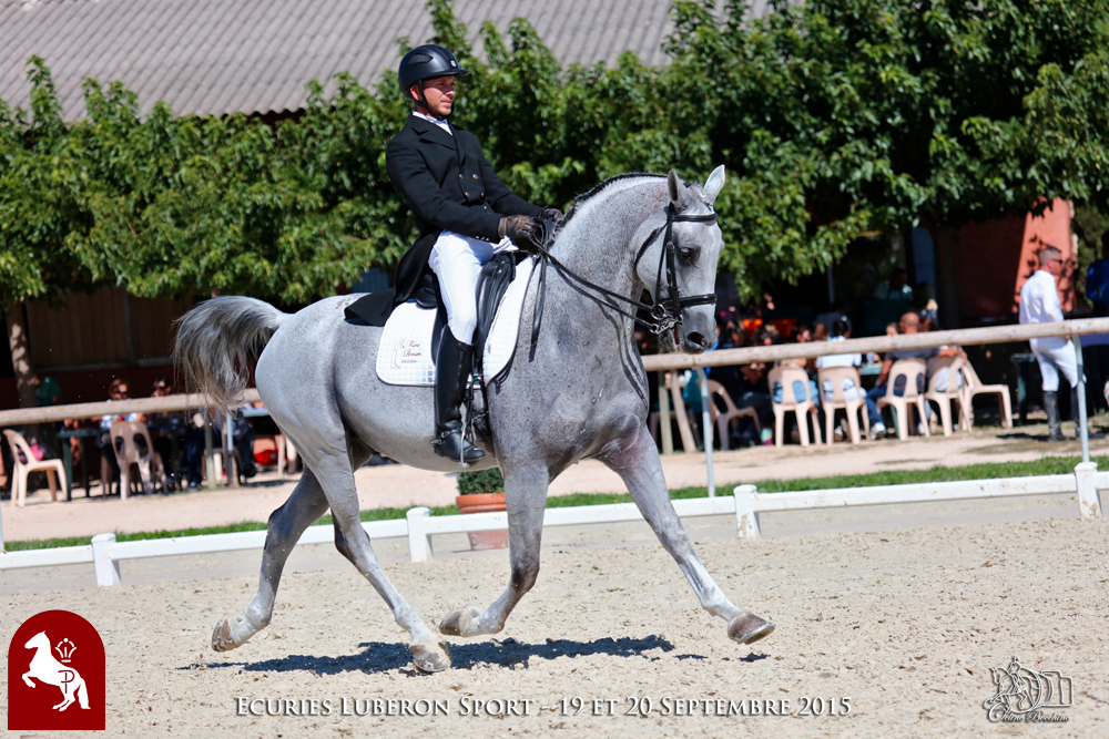 Elevage LIPIZZAN PHILIP Quasi Favory Graina 3