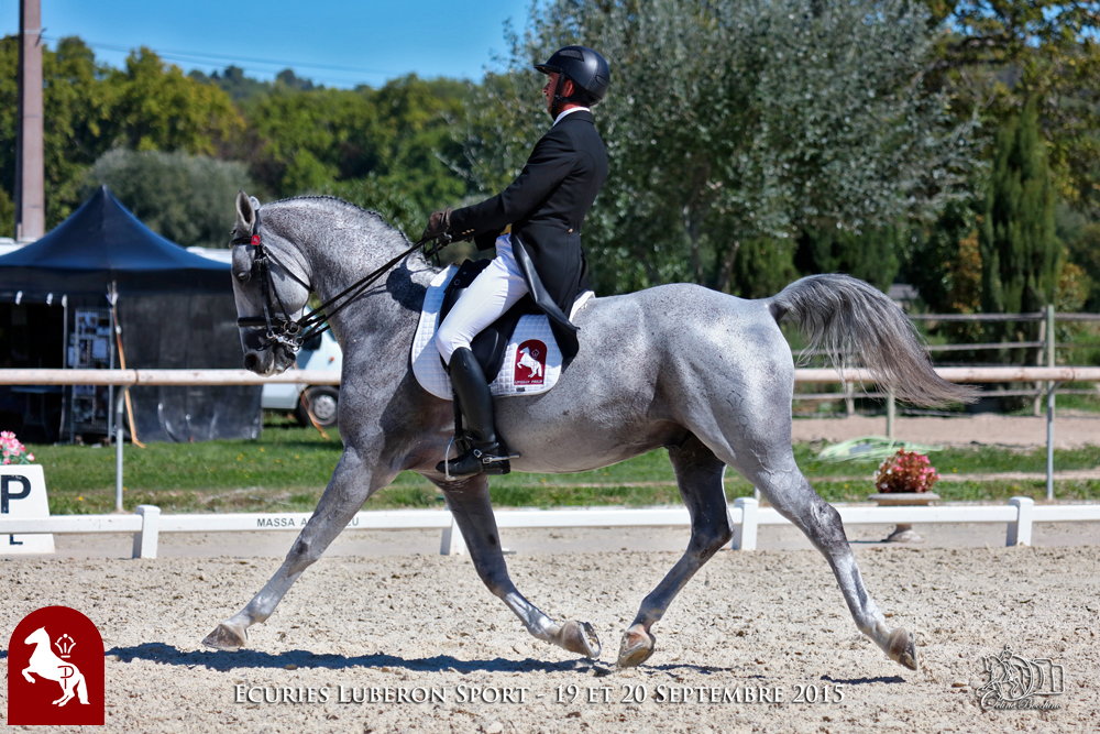 Elevage LIPIZZAN PHILIP Quasi Favory Graina 5