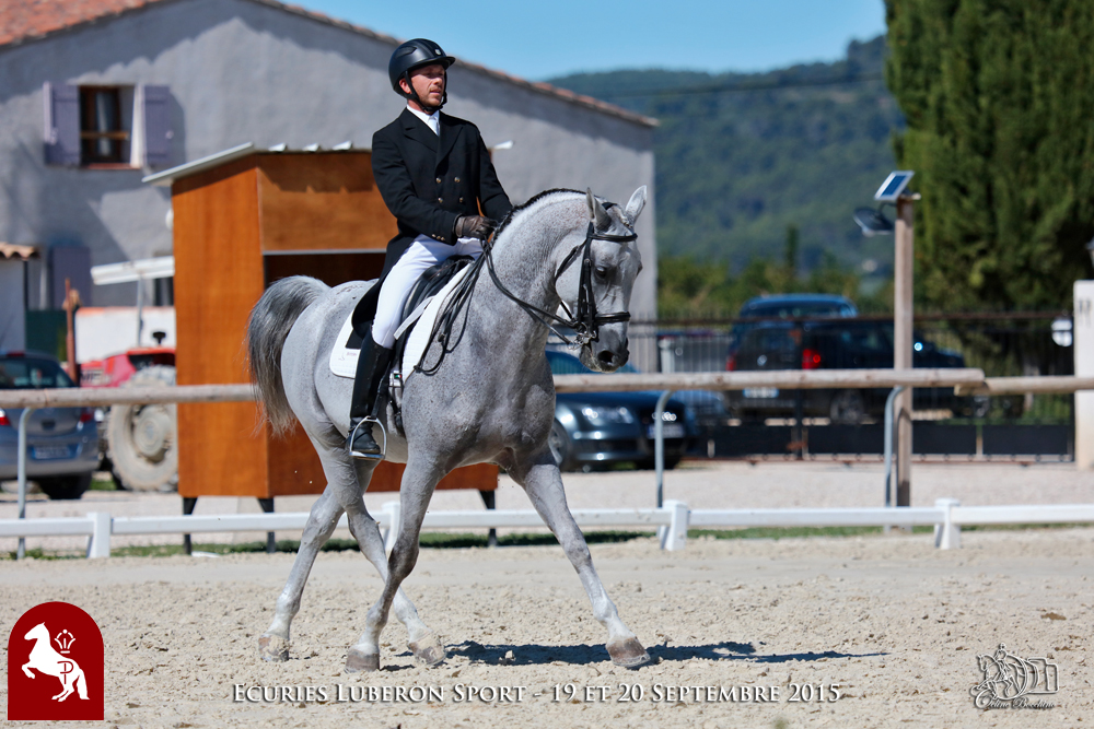Elevage LIPIZZAN PHILIP Quasi Favory Graina 6
