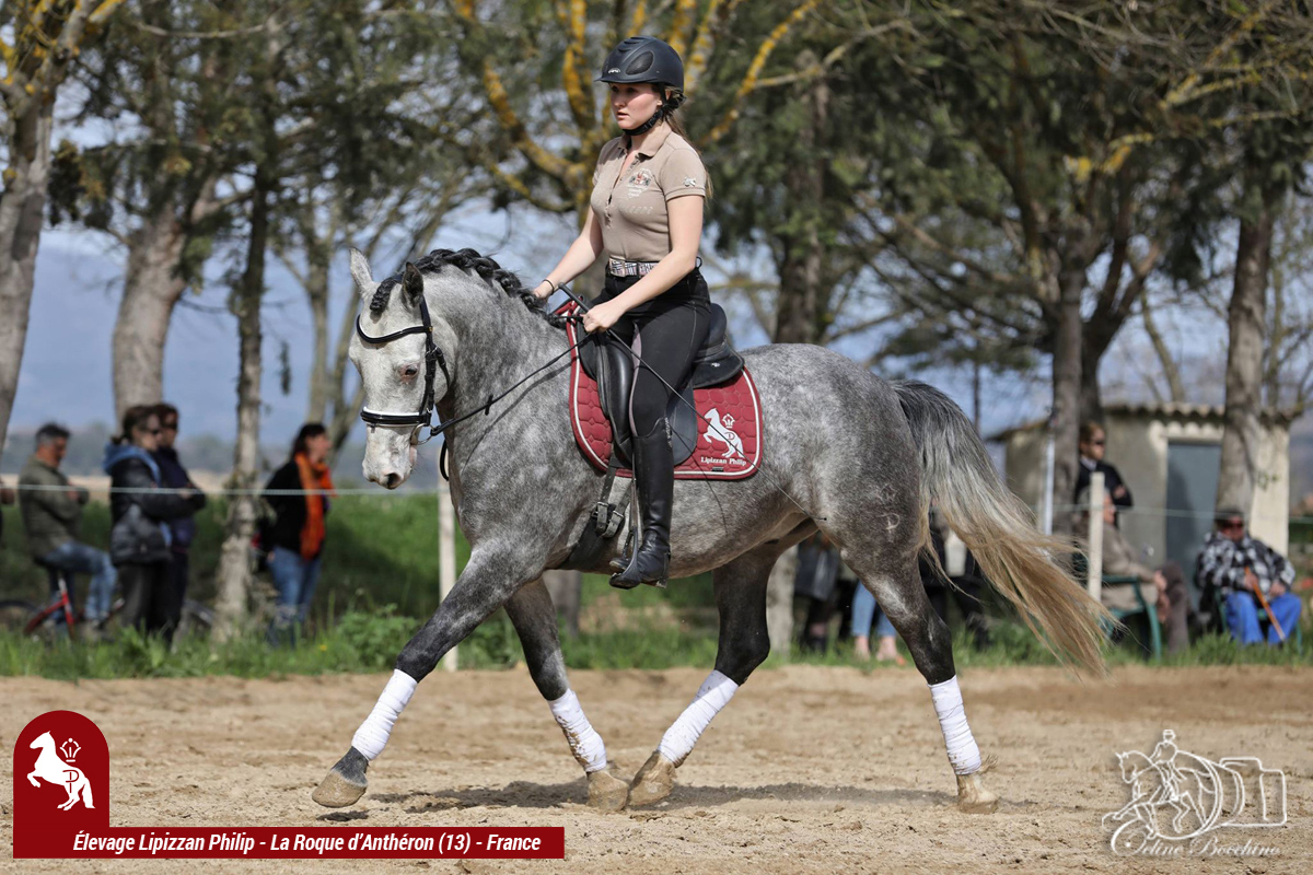 Elevage LIPIZZAN PHILIP Stage JJ BOISSON Avril2018001
