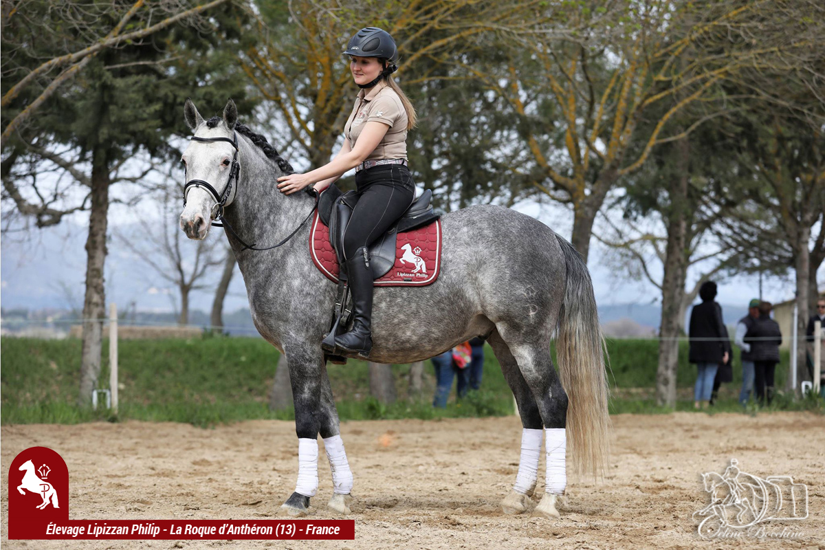 Elevage LIPIZZAN PHILIP Stage JJ BOISSON Avril2018015