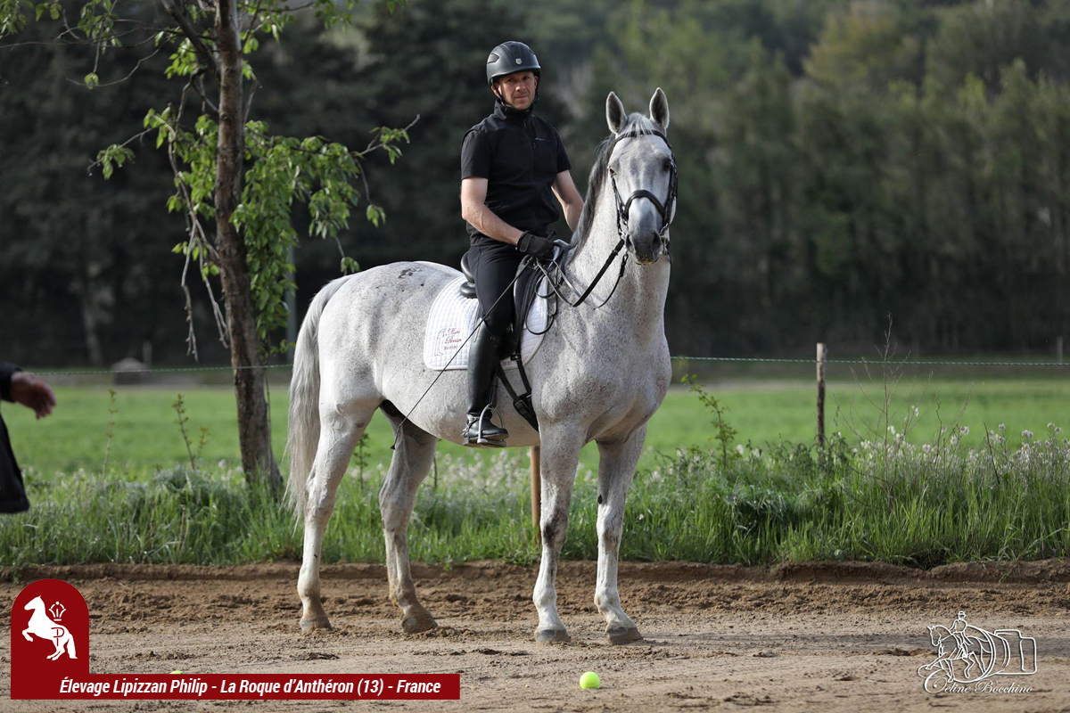 Elevage LIPIZZAN PHILIP Stage JJ BOISSON Avril2018016