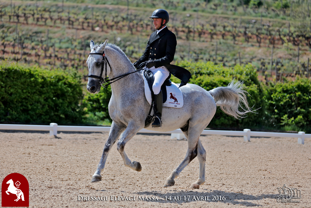 Elevage LIPIZZAN PHILIP Quasi Favory Graina 1
