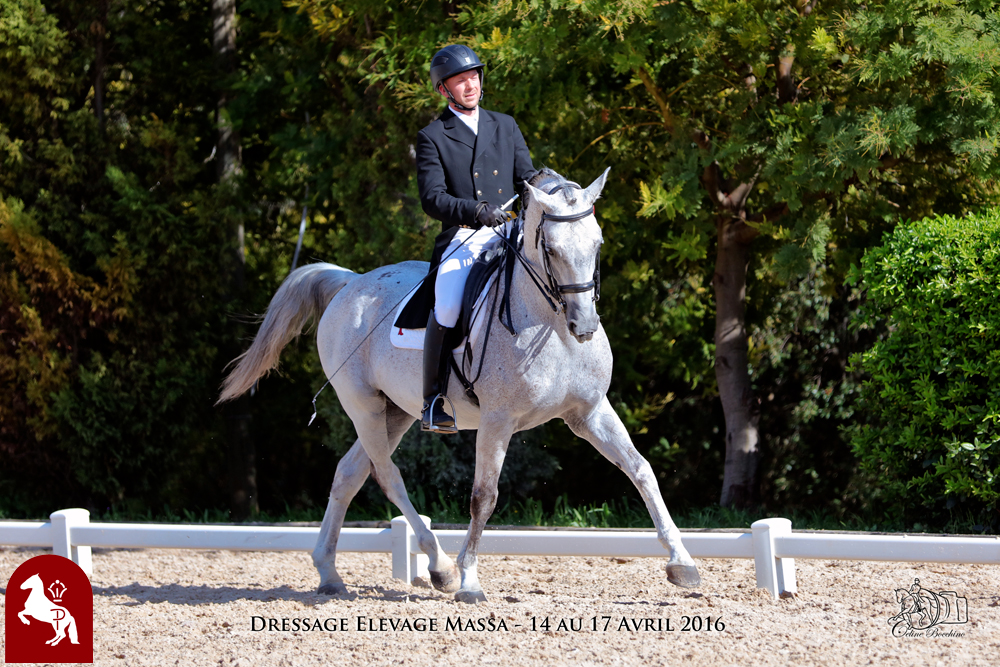Elevage LIPIZZAN PHILIP Quasi Favory Graina 2