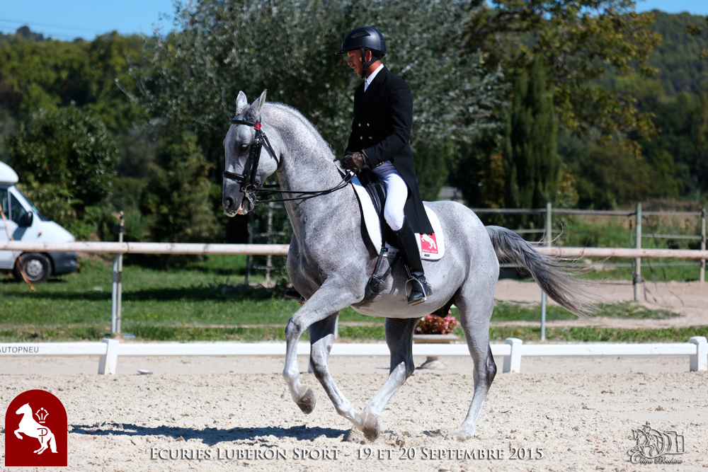 Elevage LIPIZZAN PHILIP Quasi Favory Graina 4