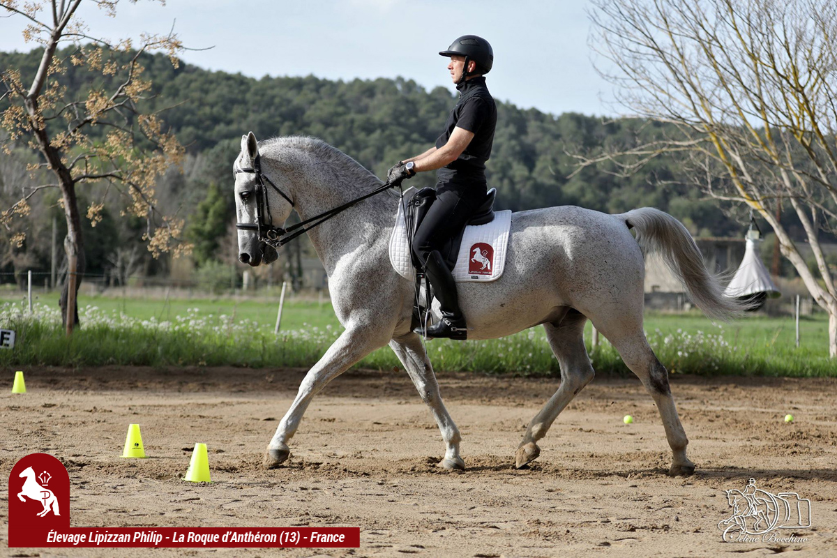 Elevage LIPIZZAN PHILIP Stage JJ BOISSON Avril2018000